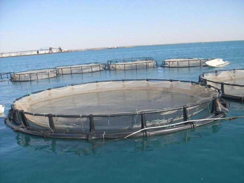 Рыбоводство, аквакультура, выращивание рыбы