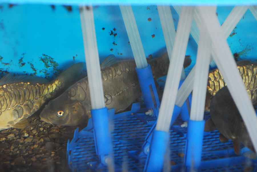 Биофильтрующая конструкция Acqua Nest